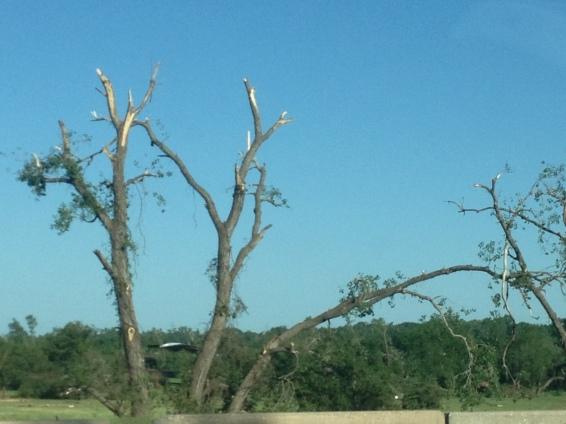 Tornado Trees