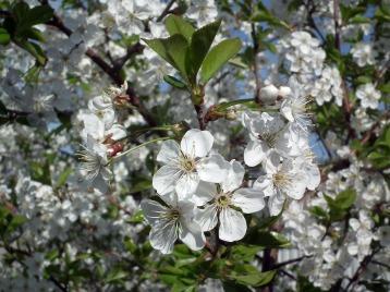 flower-200569_1280
